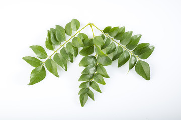 Top View of Fresh Green Curry Leaves Isolated on White Background Shot in Studio.