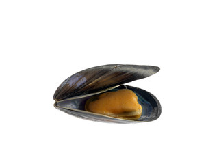 opened mussel on white background