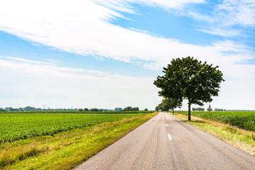 road in fields in Alsace region in summer day