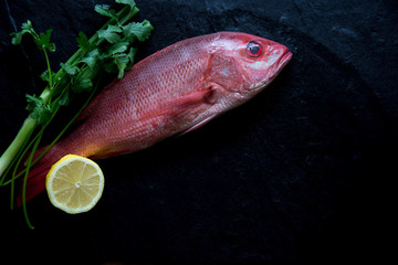 Raw whole fresh Red Snapper displayed on a black background with ice and copy space
