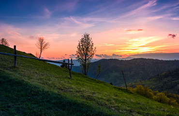 grassy slope rural area at sunset. beautiful mountainous landscape of Ukainian Carpathians in springtime