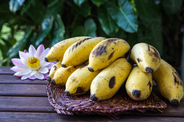 Yellow cultivated banana, Raw Organic Yellow Baby Bananas in a Bunch