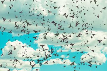 metafizyczne pochmurne turkusowe niebo z białymi miękkimi chmurami i wieloma ptakami