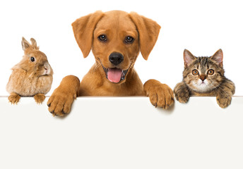 Zwierzęta wyglądają na ścianie