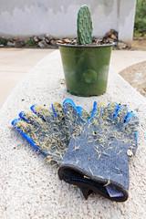 Gartenhandschuhe voller Stacheln vor einem Kaktus im Blumentopf