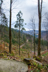 View of a forest road seen from the mountain trail which runs from Rycerki to Przegibek, Beskid Zywiecki, Poland