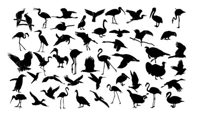 a collection of silhouettes of birds