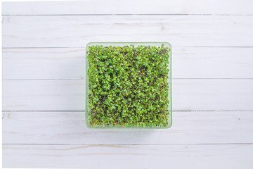 Tray of fresh microgreen spouts on white wood