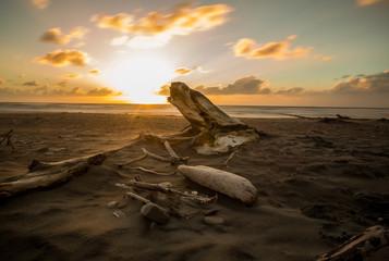 Beach Driftwood Sunset