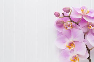 Różowy storczykowy kwiat na białym drewnie textured tło, przestrzeń dla teksta.