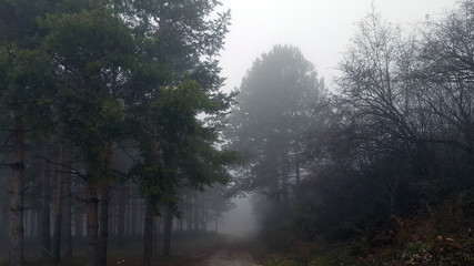 Amazing mystical forest with fog