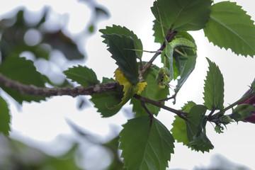 Little mantis on branch