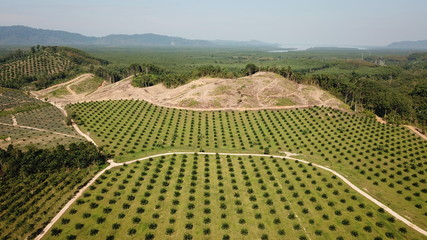 Deforestation. Oil palm plantation at rainforest edge in Southeast Asia