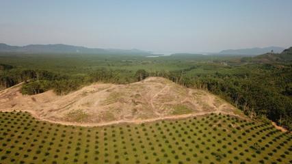 Deforestation. Oil palm plantation at rainforest edge in Southeast Asia