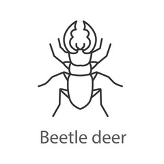 Stag beetle linear icon