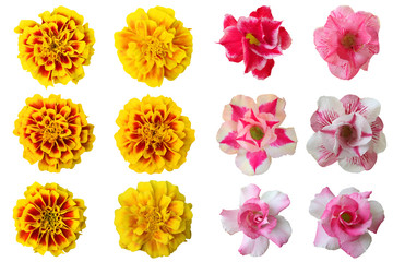 Selection of Various Flowers Isolated on White Background,Collage of gentle rose flowers isolated on white background