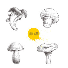 Hand drawn sketch style different forest mushrooms set. Champignon, oyster, chanterelle and porcini mushrooms. Organic eco raw food vector illustrations isolated on white background.