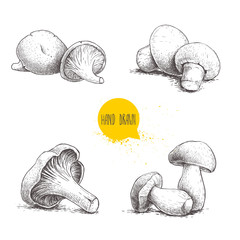 Hand drawn sketch style fresh fram mushrooms compositions set. Champignons, oysters, chanterelles and porcini mushrooms. Organic eco raw food vector illustrations isolated on white background.
