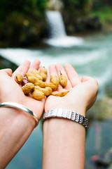 Female 's hands holding bunch of peanuts in the nature