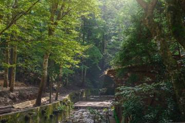京都 貴船川の清流風景