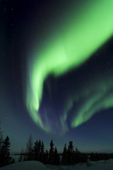 Nightsky lit up with aurora borealis, northern lights, wapusk national park, Manitoba, Canada.
