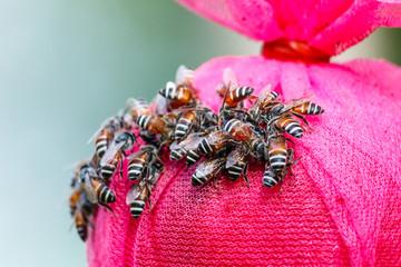 Bee gathering food.