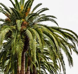 Palm in California