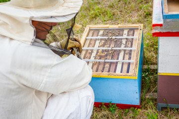Apiarist, beekeeper working in apiary