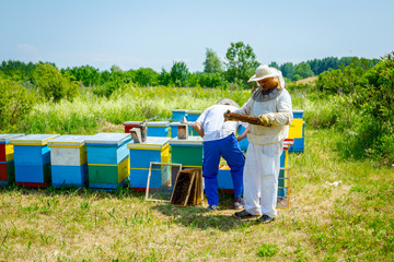 Two apiarists, beekeepers are checking bees on honeycomb wooden frame