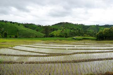Green terrace rice field in Chiangmai, Thailand