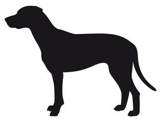 Dalmatian - Vector black dog silhouette isolated