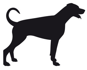 Doberman Uncropped - Vector black dog silhouette isolated