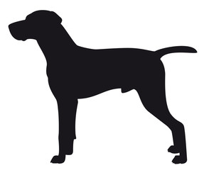 Hungarian Viszla - Vector black dog silhouette isolated