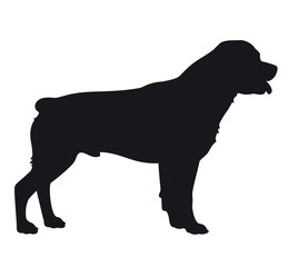 Rottweiler dog - Vector black silhouette isolated