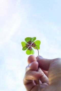 Four leaf lucky clover held by hand against sky