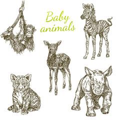 Set of baby animals. Wild. Monkey, zebra, deer, tiger and rhino. Vintage. Engraving style. Vector illustration.