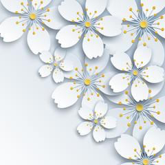 Jasne tło z białymi kwiatami sakura