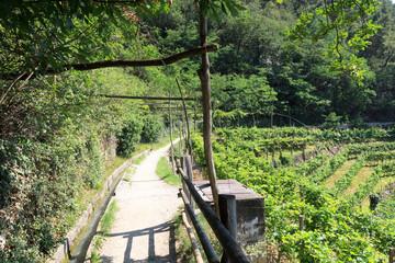 Hiking path and Vineyard panorama in Merano, South Tyrol