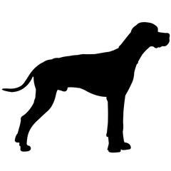 German Shorthaired Pointer Dog Silhouette Vector Graphics