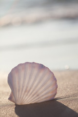 seashell on the beach- Image of tropical sandy beach and seashell. Summer concept