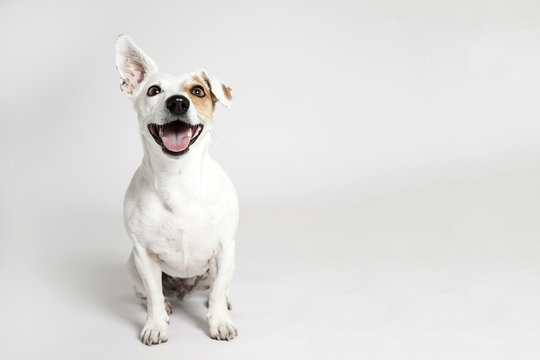 The funny smiling dog