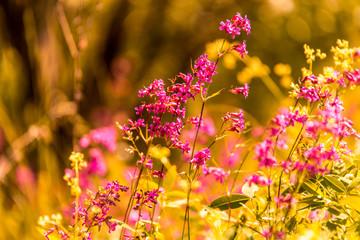 Beautiful wild flowers in summer