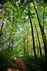 beautiful green forest. Forest trail landscape