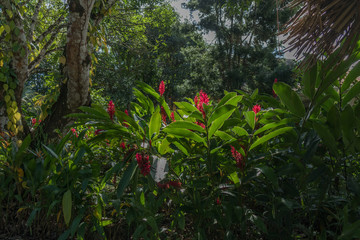 Hiking trail in Belize with red ginger flowers