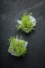 Group of lettuce sprouts, young vegetables on a black background, vertical.