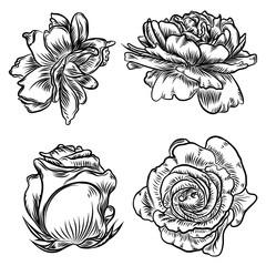 Roses set. Vintage flower collection. Wild flowers mix for design. Vector.