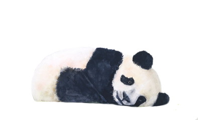 watercolor panda sleep isolated on white background