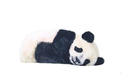 watercolor panda sleep isolated on white background