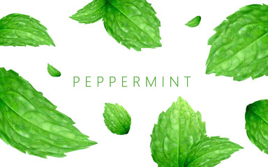 Peppermint background design