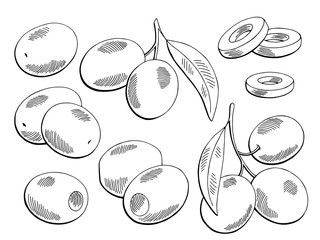 Olive graphic set black white isolated sketch illustration vector